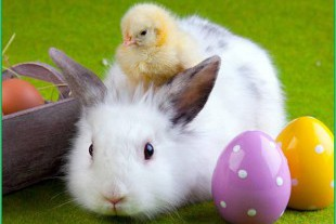ostern-hase-kuecken_2